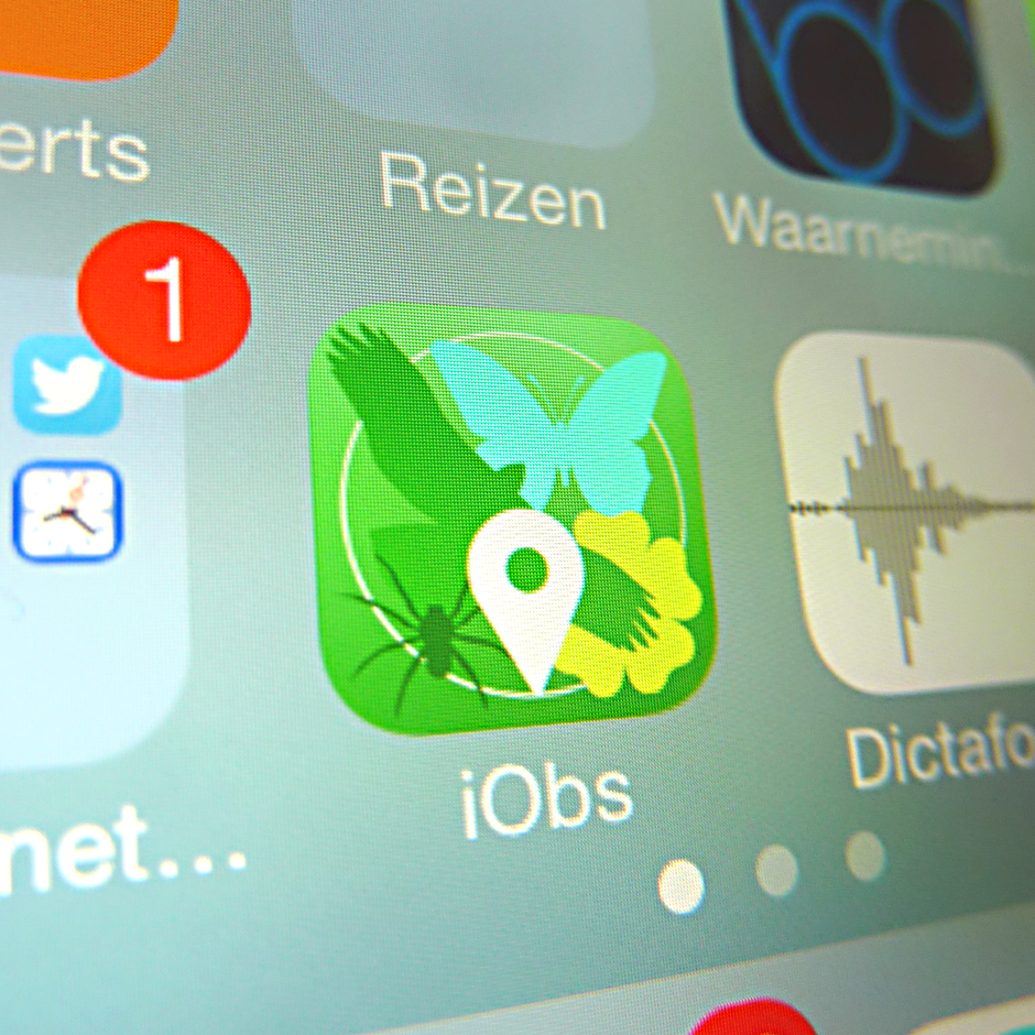 iObs - app voor natuurliefhebbers